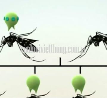 Dùng muỗi biến đổi gen để chống muỗi liệu có an toàn?