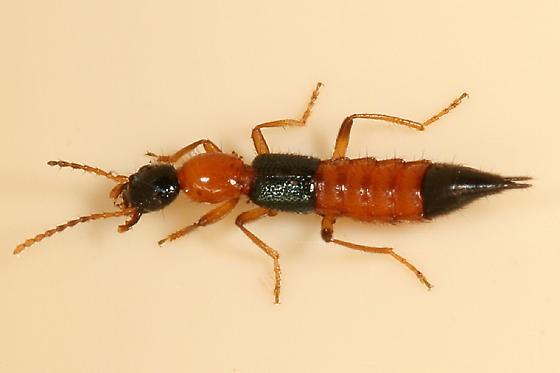 Tuy kiến ba khoang không có độc tố gây chết người nhưng những vết thương nó đem lại có thể gây cảm giác đau đớn và khó lành vì vậy cần tránh sự xuất hiện của chúng
