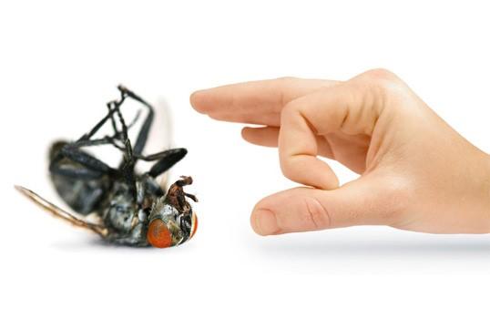 Các phương pháp hóa học để tiêu diệt một số lượng lớn ruồi