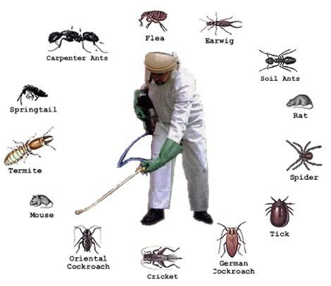 Các phương pháp vật lý như bẫy ruồi bằng chất thải và chất độc hay các loại bẫy điện, sẽ giúp cho loài ruồi bị thu hút vào các chất độc hay điện áp thế