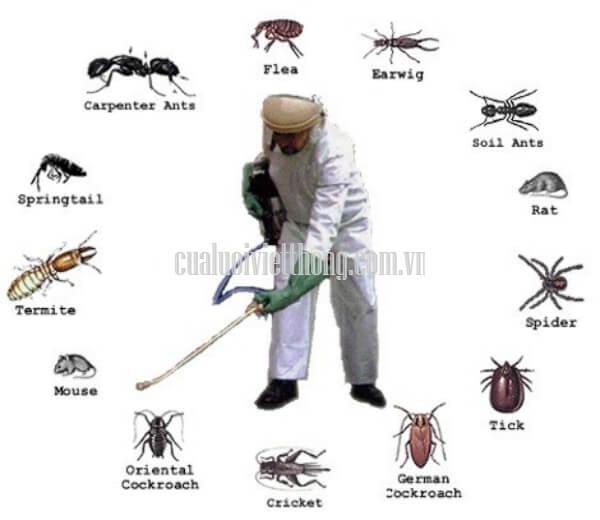 Cần phòng tránh tất cả các loại côn trùng gây hại