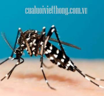 Tại sao muỗi đốt lại bị sưng và ngứa rất lâu?