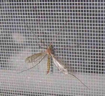 Lắp đặt cửa lưới chống muỗi cho khu công nghiệp
