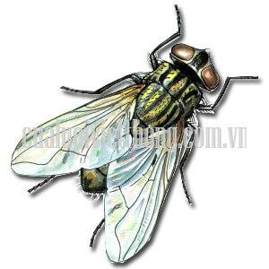 Bạn có bao giờ khó chịu với những chú ruồi