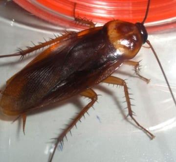 Những cách để phòng chống côn trùng ở khu vực nhà vệ sinh