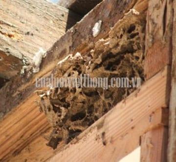 Côn trùng xâm nhập vào nhà và cách phòng chống hữu hiệu