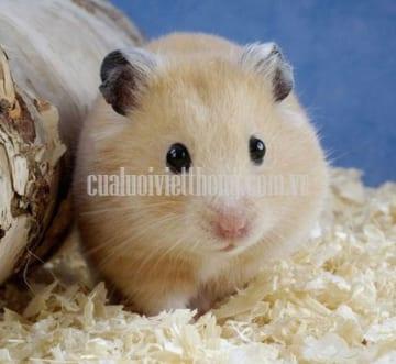 Mẹo diệt chuột nhà đơn giản và hiệu quả nhất