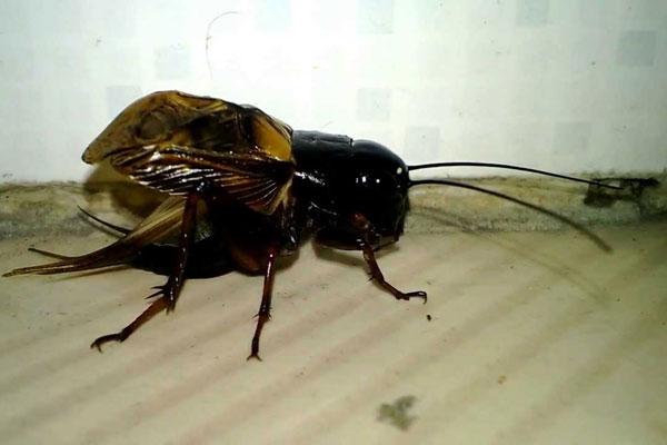 Các loại côn trùng thường gặp trong nhà