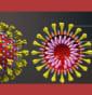 Côn trùng có lây nhiễm virus corona hay không?