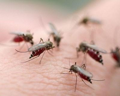 chống muỗi trong nhà